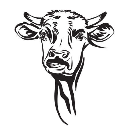 Decorative portrait of cute funny cow shows the tongue vector illustration in black color isolated on white background. Vettoriali