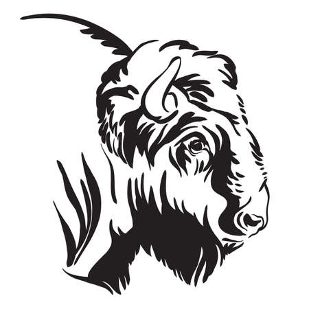 Decorative portrait of bison vector illustration in black color isolated on white background.