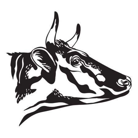 Abstract black contour portrait of bull vector illustration isolated on white background. Engraving template image of cow for label, logo, emblem, design, packaging, print and tattoo. Vettoriali