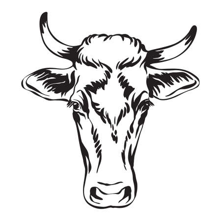 Abstract contour portrait of cow vector illustration isolated on white background. Engraving template image of bull for label, logo, emblem, design, packaging, print and tattoo. Vettoriali