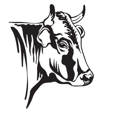 Abstract contour portrait of horned bull or cow vector illustration isolated on white background. Engraving template image for label, logo, emblem, design, packaging, print and tattoo. Vettoriali
