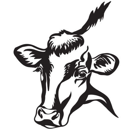 Abstract contour portrait of bull vector illustration in black color isolated on white background. Engraving template image of cow for label, logo, emblem, design, packaging, print and tattoo.