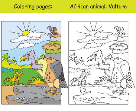 Vector coloring pages with cute vulture in african area. Cartoon isolated colorful illustration. Coloring and colored image of vulture. For coloring book, design, preschool education, print and game. Ilustração