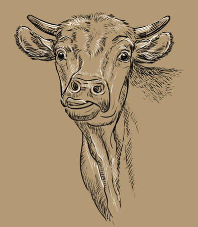 Monochrome cow head shows the tongue sketch hand drawn vector illustration isolated on brown background. Vintage illustration for label, poster, print and design.