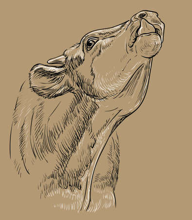 Monochrome cow head stuck out her tongue sketch hand drawn vector illustration isolated on brown background. Vintage illustration for label, poster, print and design. 矢量图像