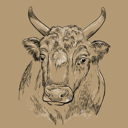 Monochrome surprised bull head looking in profile sketch hand drawn vector illustration isolated on brown background. Cow vintage illustration for label, poster, print and design. 矢量图像