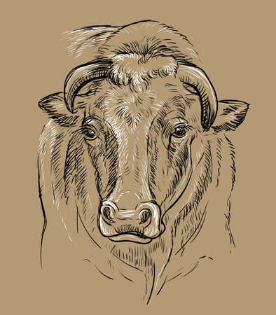Monochrome horned wise bull head sketch hand drawn vector illustration isolated on brown background. Vintage illustration of cow for label, poster, print and design.