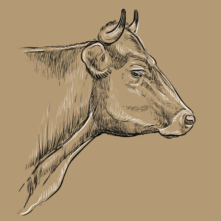 Monochrome thoughtful portrait of bull sketch hand drawn vector illustration isolated on brown background. Vintage illustration of cow for label, poster, print and design.