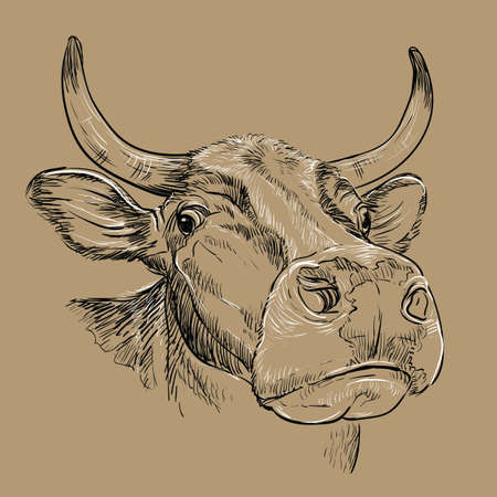 Monochrome amusing portrait of bull sketch hand drawn vector illustration isolated on brown background. Vintage illustration of cow for label, poster, print and design.