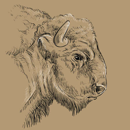 Monochrome thoughtful portrait of bison sketch hand drawn vector illustration isolated on brown background. Vintage illustration for label, poster, print and design. 矢量图像