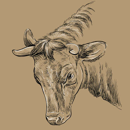 Monochrome portrait of angry bull sketch hand drawn vector illustration isolated on brown background. Vintage illustration of cow for label, poster, print and design.