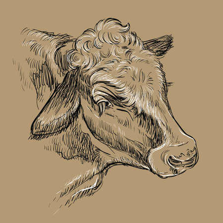 Monochrome portrait of dreamy cow sketch hand drawn vector illustration isolated on brown background. Vintage illustration of bull for label, poster, print and design.