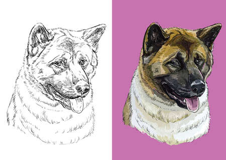 Realistic head of American akita. Vector black and white and colorful isolated illustration of dog.