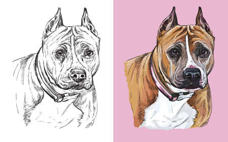 Realistic head of american staffordshire terrier. Vector black and white and colorful isolated illustration of dog. Ilustração