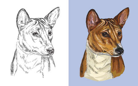 Realistic head of american Basenji. Vector black and white and colorful isolated illustration of dog. Ilustração