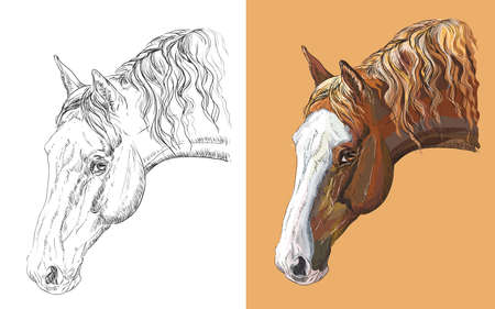 Realistic head of beautiful horse. Vector black and white and colorful isolated illustration of horse.