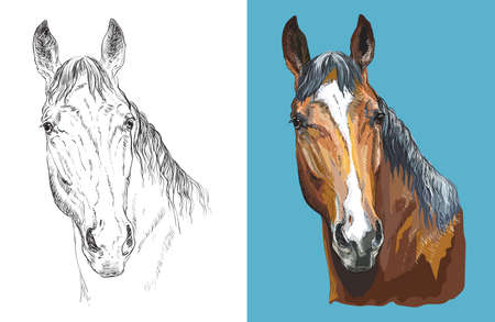 Realistic head of chestnut horse. Vector black and white and colorful isolated illustration of horse. Ilustração
