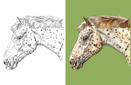Head of spotted Knabstrupper horse. Vector black and white and colorful isolated illustration of horse.
