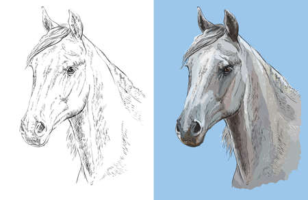 Realistic head of beautiful arabian horse. Vector black and white and colorful isolated illustration of horse. Ilustração