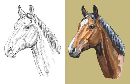 Realistic head of Trakehner horse. Vector black and white and colorful isolated illustration of horse. Ilustração