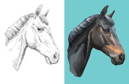 Hand drawn head of curious horse. Vector black and white and colorful isolated illustration of horse. Ilustração