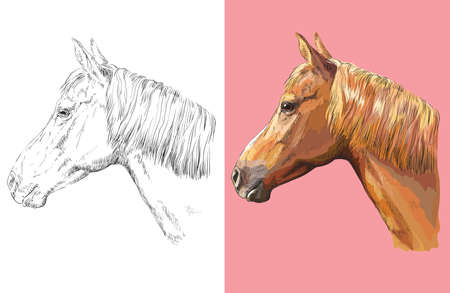 Hand drawn head of ginger horse. Vector black and white and colorful isolated illustration of horse.