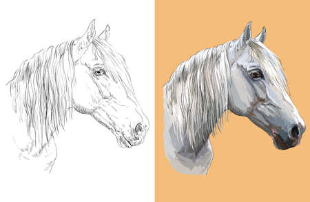 Realistic head of gray horse. Vector black and white and colorful isolated illustration of horse.