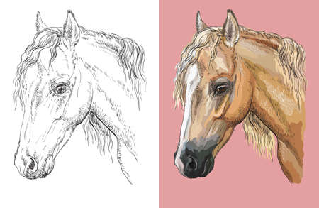 Hand drawn head of welsh pony. Vector black and white and colorful isolated illustration of horse.