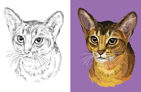Vector illustration portrait of cute Abyssinian cat Ilustração