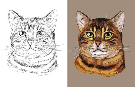 Vector illustration portrait of cute Bengal cat