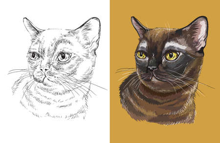 Vector illustration portrait of cute Burmese cat