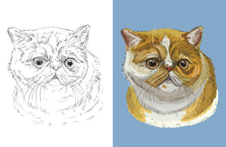 Vector illustration portrait of Exotic shorthair cat Ilustração