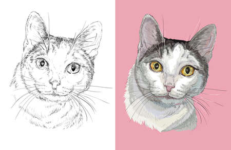 Vector illustration portrait of cute fluffy cat