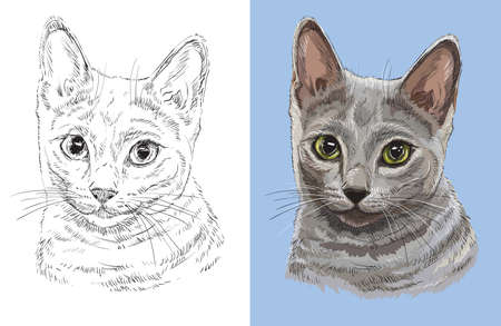Vector illustration portrait of cute Russian blue cat