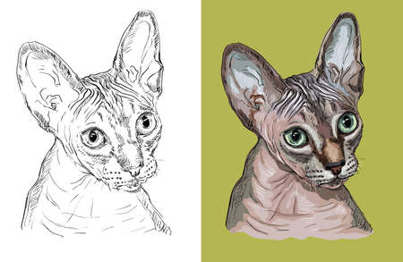 Vector illustration portrait of cute Sphynx cat