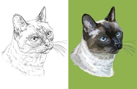 Vector illustration portrait of cute Thai cat