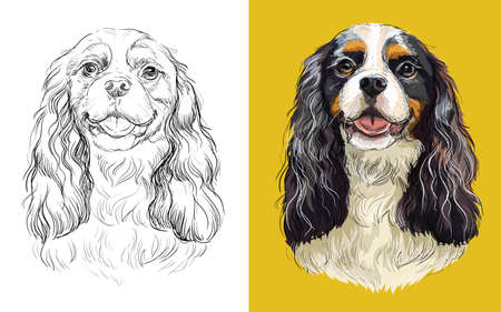 Realistic head of Cavalier King Charles Spaniel dog. Vector black and white and colorful isolated illustration of dog. For decoration, coloring book, design, prints, posters, postcards, stickers, tattoo, t-shirt