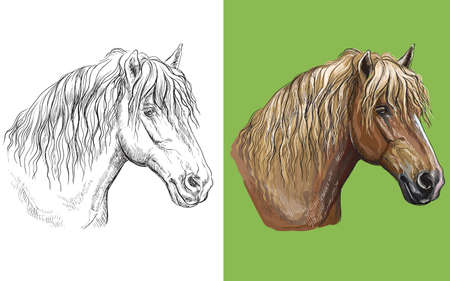 Vector illustration portrait of draft horse colorful and monochrome 일러스트