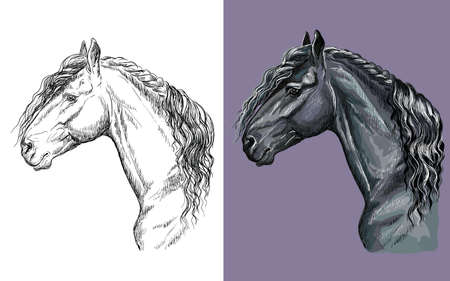 Vector illustration portrait of black Friesian horse 일러스트