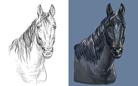 Vector illustration portrait of brown bay horse Ilustracja