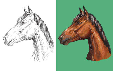 Vector illustration portrait of clever chestnut horse