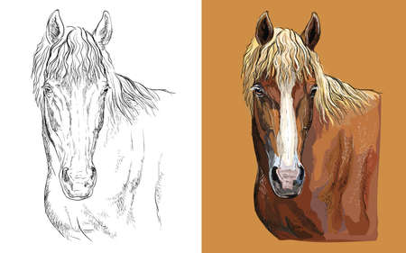Vector illustration portrait of liver chestnut horse