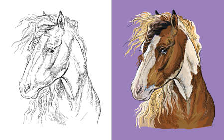 Vector illustration portrait of pinto horse colorful and monochrome