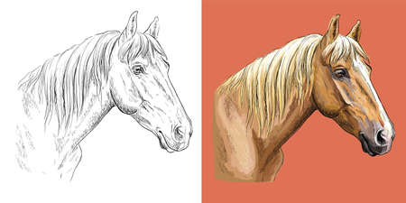 Vector illustration portrait of beauty sports horse 일러스트