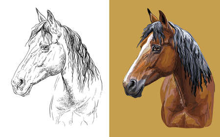 Vector illustration portrait of young bay horse 일러스트