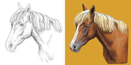 Vector illustration portrait of beauty young horse 일러스트