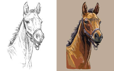 Realistic head of colt in the halter. Vector black and white and colorful isolated illustration of horse. For decoration, coloring book, design, prints, posters, postcards, stickers, tattoo, t-shirt 일러스트