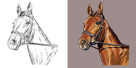 Realistic head of horse in the bridle. Vector black and white and colorful isolated illustration of horse. For decoration, coloring book, design, prints, posters, postcards, stickers, tattoo, t-shirt 일러스트