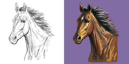 Realistic head of horse with a flowing mane. Vector black and white and colorful isolated illustration of horse. For decoration, coloring book, design, prints, posters, postcards, stickers, tattoo, t-shirt