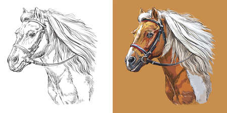 Realistic head of sportive pinto pony. Vector black and white and colorful isolated illustration of horse. For decoration, coloring book, design, prints, posters, postcards, stickers, tattoo, t-shirt 일러스트